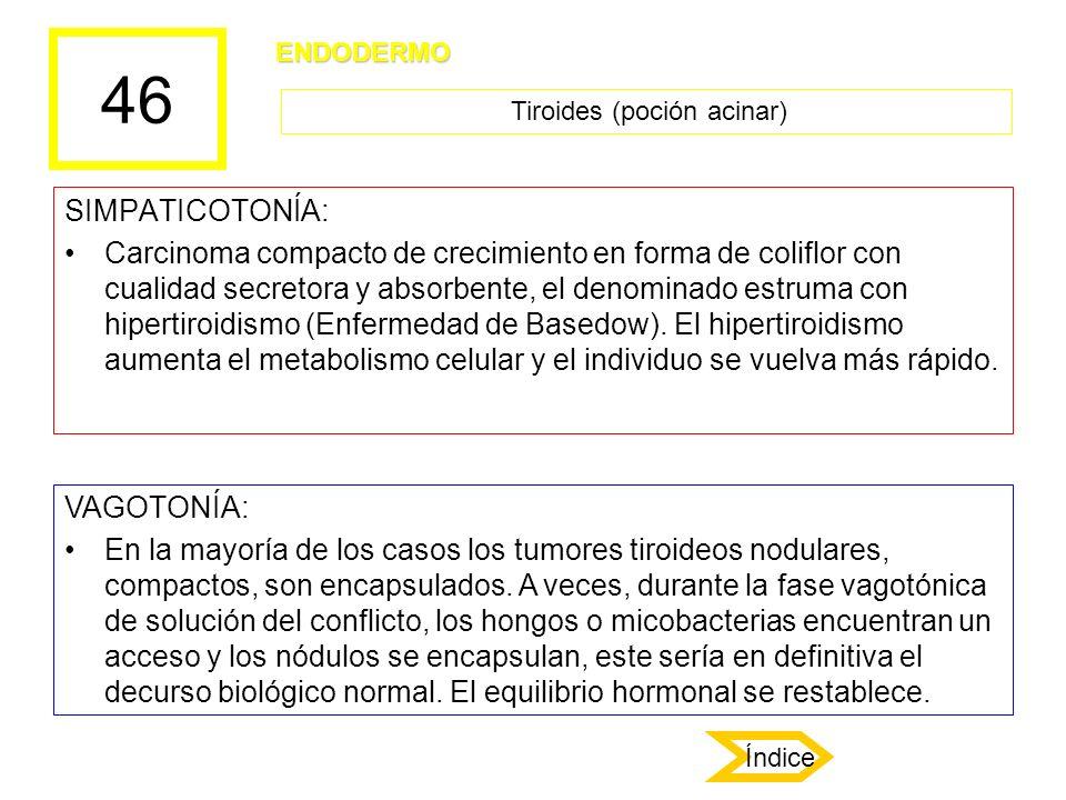 46 SIMPATICOTONÍA: Carcinoma compacto de crecimiento en forma de coliflor con cualidad secretora y absorbente, el denominado estruma con hipertiroidis