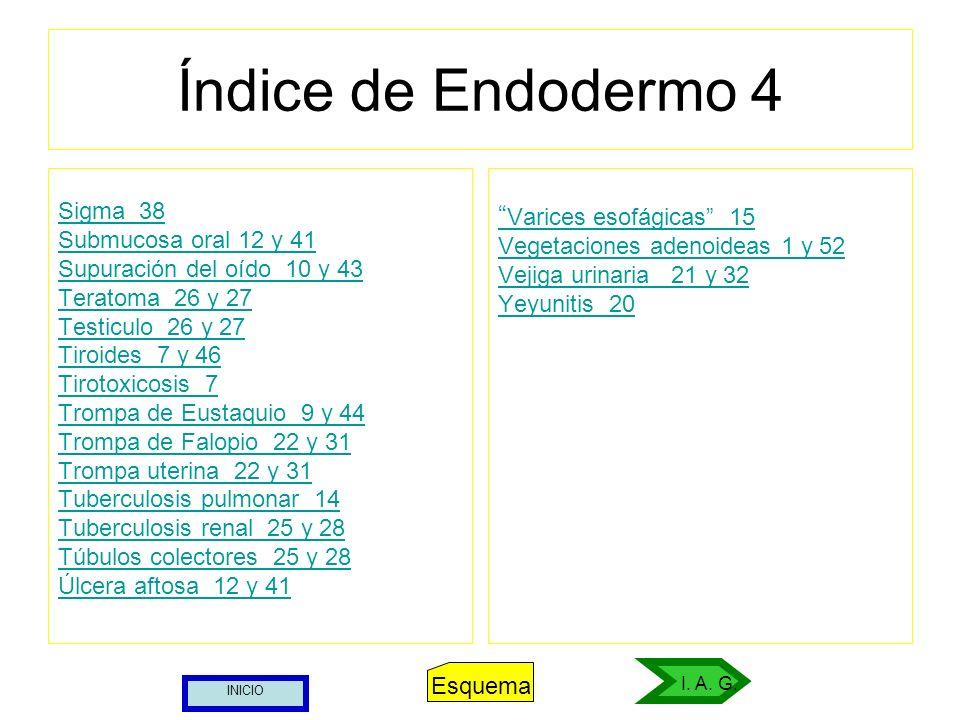 Índice de Endodermo 4 Sigma 38 Submucosa oral 12 y 41 Supuración del oído 10 y 43 Teratoma 26 y 27 Testiculo 26 y 27 Tiroides 7 y 46 Tirotoxicosis 7 T