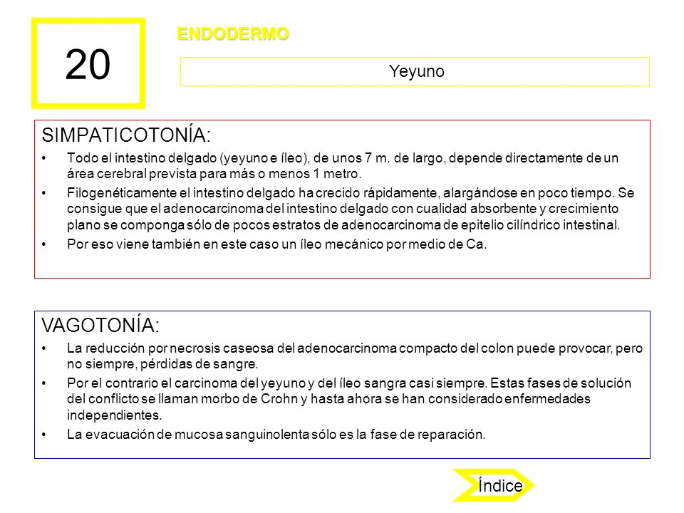 20 SIMPATICOTONÍA: Todo el intestino delgado (yeyuno e íleo), de unos 7 m. de largo, depende directamente de un área cerebral prevista para más o meno