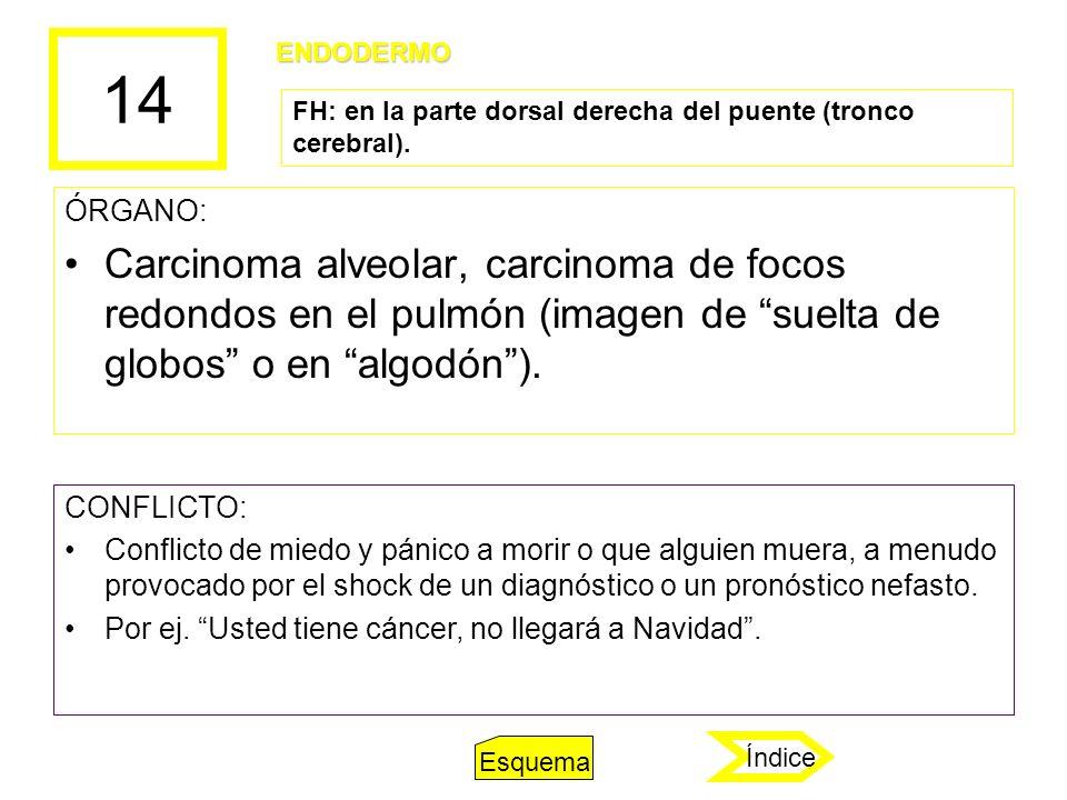 14 ÓRGANO: Carcinoma alveolar, carcinoma de focos redondos en el pulmón (imagen de suelta de globos o en algodón). CONFLICTO: Conflicto de miedo y pán