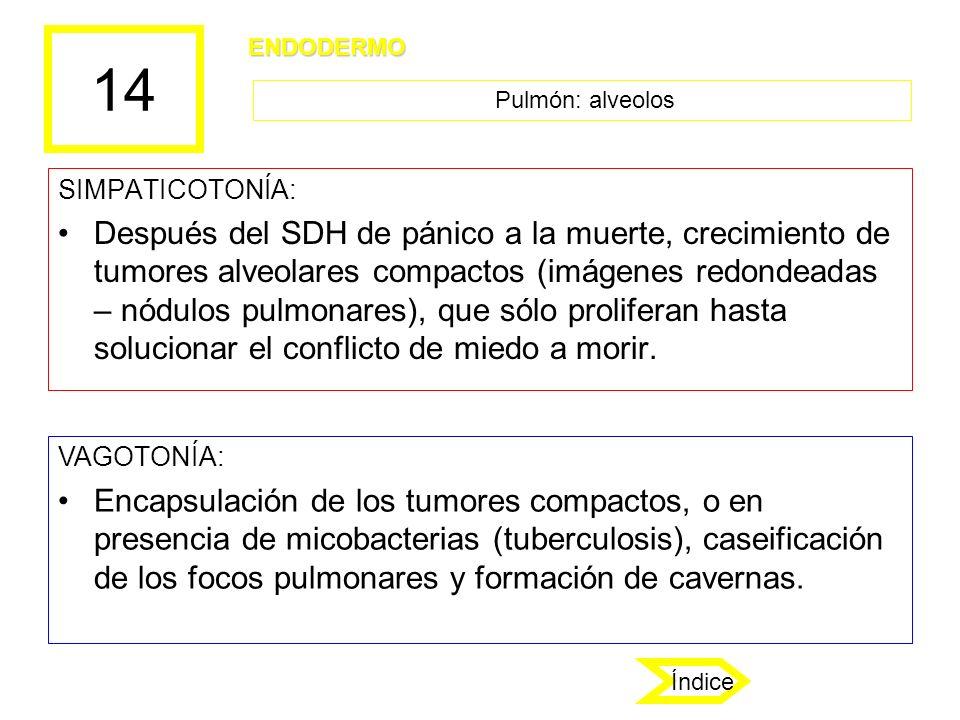 14 SIMPATICOTONÍA: Después del SDH de pánico a la muerte, crecimiento de tumores alveolares compactos (imágenes redondeadas – nódulos pulmonares), que