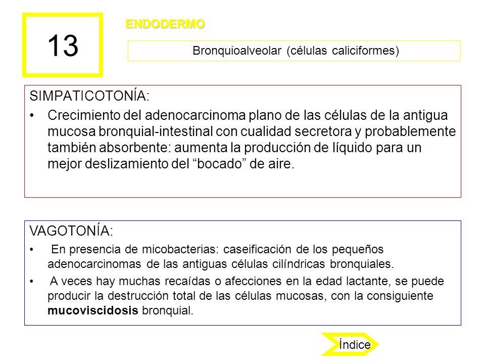 13 SIMPATICOTONÍA: Crecimiento del adenocarcinoma plano de las células de la antigua mucosa bronquial-intestinal con cualidad secretora y probablement