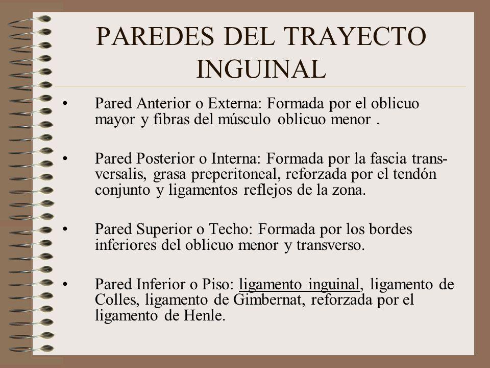 PAREDES DEL TRAYECTO INGUINAL Pared Anterior o Externa: Formada por el oblicuo mayor y fibras del músculo oblicuo menor.