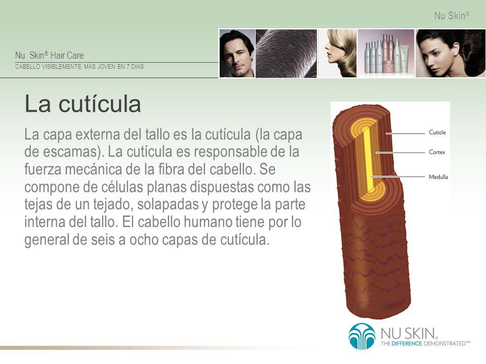 Nu Skin ® Hair Care CABELLO VISIBLEMENTE MÁS JOVEN EN 7 DÍAS Nu Skin ® La cutícula La capa externa del tallo es la cutícula (la capa de escamas). La c