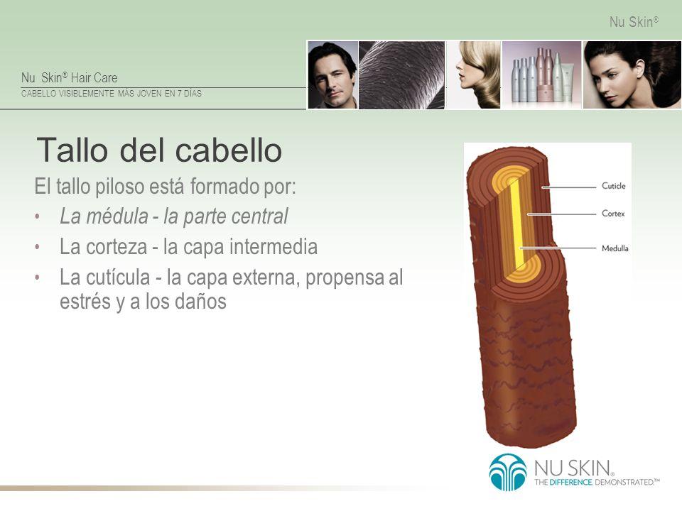 Nu Skin ® Hair Care CABELLO VISIBLEMENTE MÁS JOVEN EN 7 DÍAS Nu Skin ® Tallo del cabello El tallo piloso está formado por: La médula - la parte centra