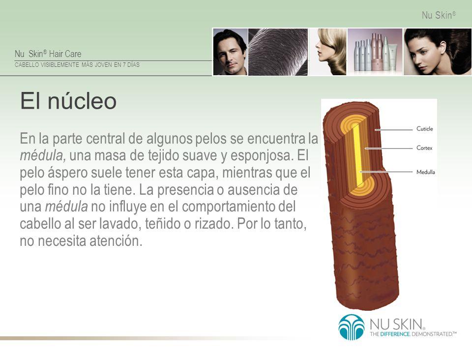 Nu Skin ® Hair Care CABELLO VISIBLEMENTE MÁS JOVEN EN 7 DÍAS Nu Skin ® El núcleo En la parte central de algunos pelos se encuentra la médula, una masa
