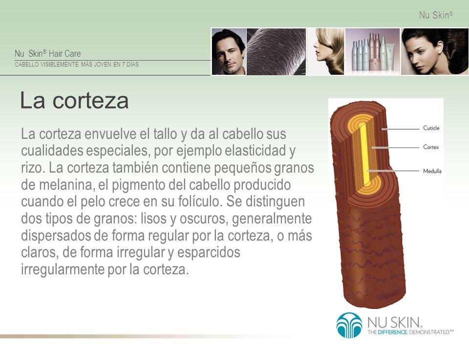 Nu Skin ® Hair Care CABELLO VISIBLEMENTE MÁS JOVEN EN 7 DÍAS Nu Skin ® La corteza La corteza envuelve el tallo y da al cabello sus cualidades especial