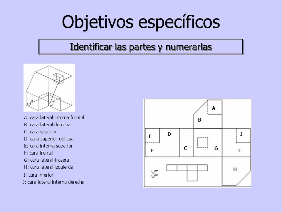 Objetivos específicos Identificar las partes y numerarlas A B C D E F G H I J A: cara lateral interna frontal B: cara lateral derecha C: cara superior