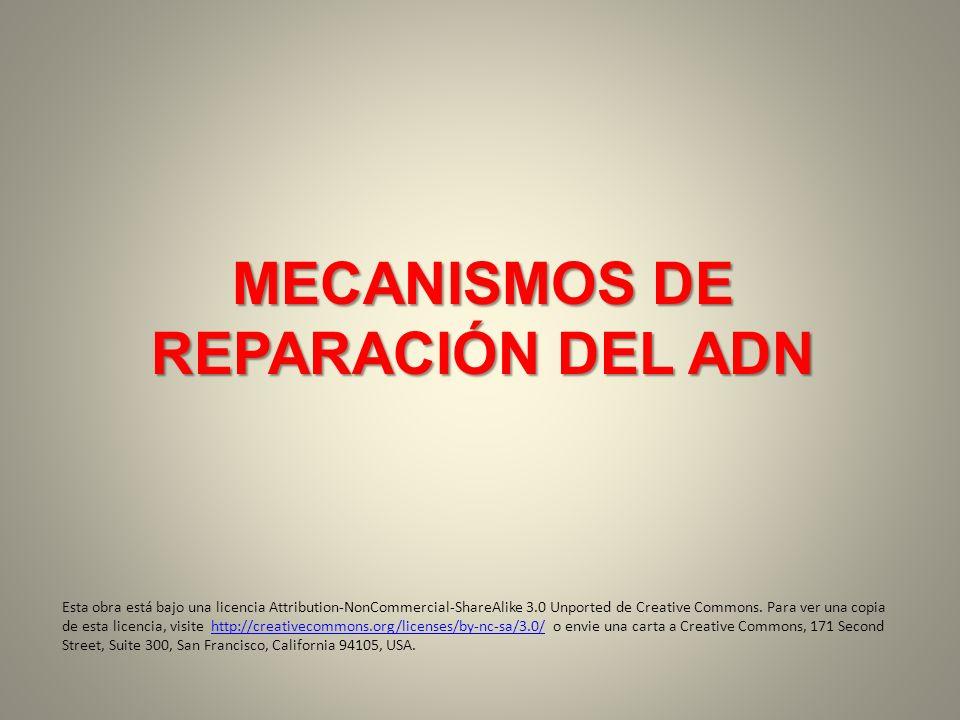 MECANISMOS DE REPARACIÓN DEL ADN Esta obra está bajo una licencia Attribution-NonCommercial-ShareAlike 3.0 Unported de Creative Commons. Para ver una