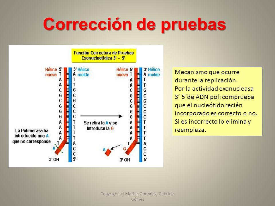 Corrección de pruebas Mecanismo que ocurre durante la replicación. Por la actividad exonucleasa 3 5´de ADN pol: comprueba que el nucleótido recién inc