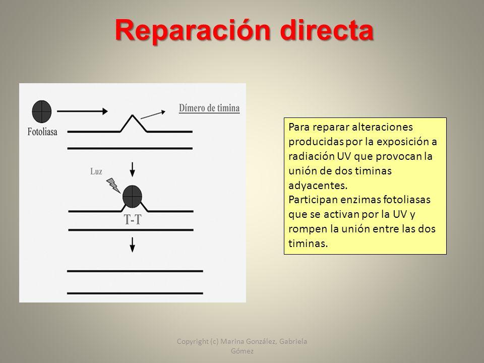 Reparación directa Para reparar alteraciones producidas por la exposición a radiación UV que provocan la unión de dos timinas adyacentes. Participan e