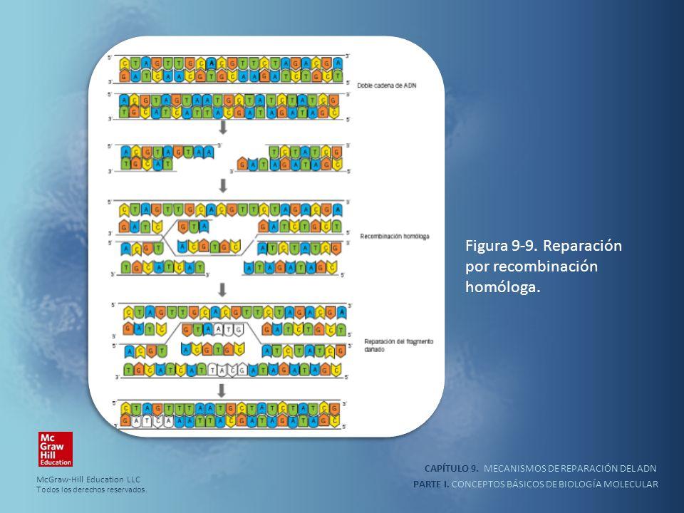 PARTE I. CONCEPTOS BÁSICOS DE BIOLOGÍA MOLECULAR CAPÍTULO 9. MECANISMOS DE REPARACIÓN DEL ADN Figura 9-9. Reparación por recombinación homóloga. McGra