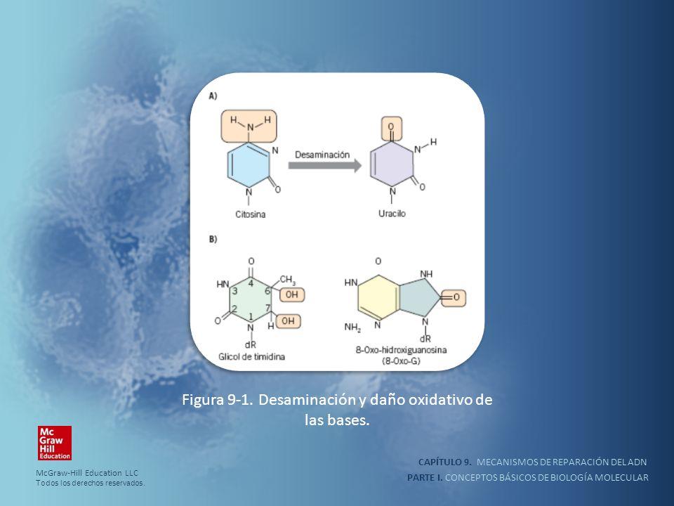 PARTE I. CONCEPTOS BÁSICOS DE BIOLOGÍA MOLECULAR CAPÍTULO 9. MECANISMOS DE REPARACIÓN DEL ADN Figura 9-1. Desaminación y daño oxidativo de las bases.