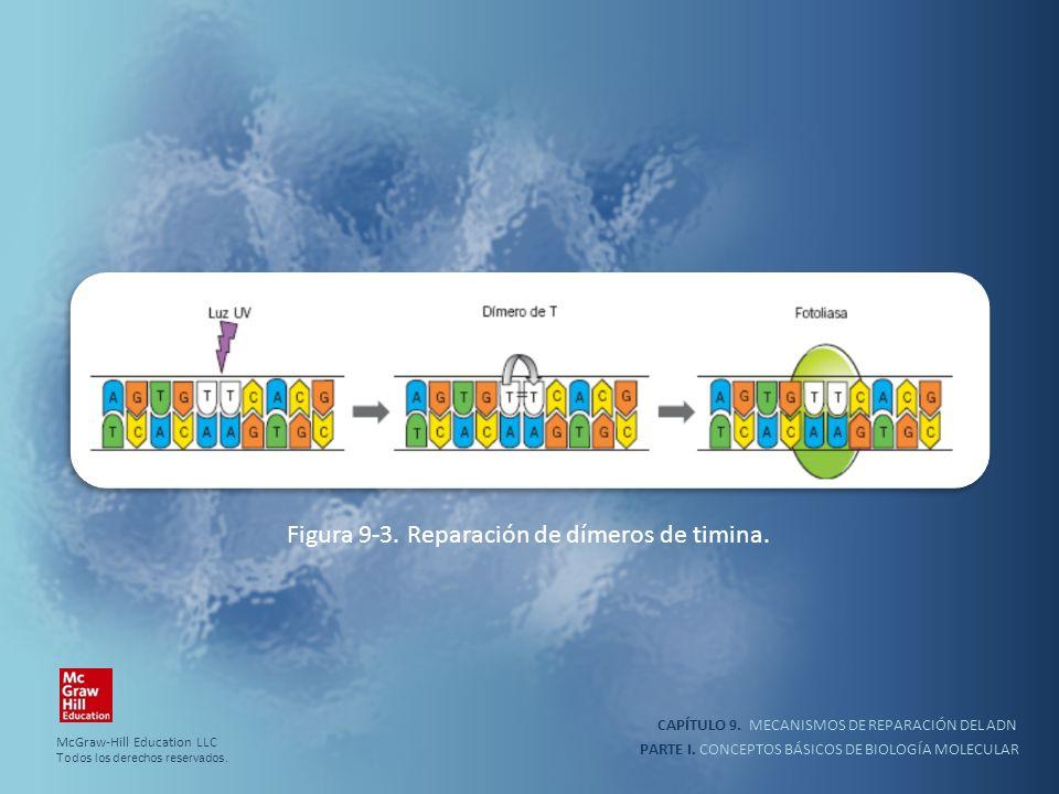 PARTE I. CONCEPTOS BÁSICOS DE BIOLOGÍA MOLECULAR CAPÍTULO 9. MECANISMOS DE REPARACIÓN DEL ADN Figura 9-3. Reparación de dímeros de timina. McGraw-Hill