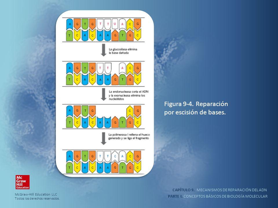 PARTE I. CONCEPTOS BÁSICOS DE BIOLOGÍA MOLECULAR CAPÍTULO 9. MECANISMOS DE REPARACIÓN DEL ADN Figura 9-4. Reparación por escisión de bases. McGraw-Hil