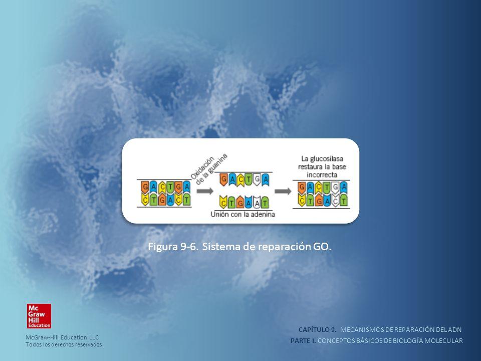 PARTE I. CONCEPTOS BÁSICOS DE BIOLOGÍA MOLECULAR CAPÍTULO 9. MECANISMOS DE REPARACIÓN DEL ADN Figura 9-6. Sistema de reparación GO. McGraw-Hill Educat