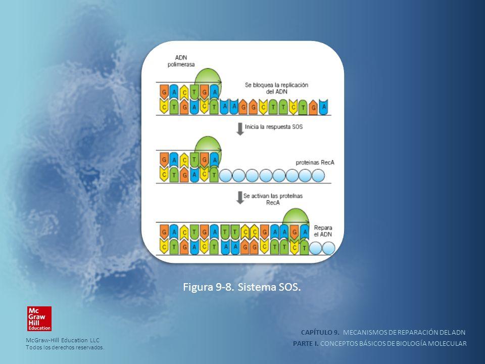 PARTE I. CONCEPTOS BÁSICOS DE BIOLOGÍA MOLECULAR CAPÍTULO 9. MECANISMOS DE REPARACIÓN DEL ADN Figura 9-8. Sistema SOS. McGraw-Hill Education LLC Todos