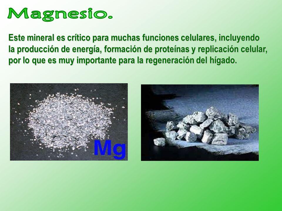 Este mineral es crítico para muchas funciones celulares, incluyendo la producción de energía, formación de proteínas y replicación celular, por lo que es muy importante para la regeneración del hígado.