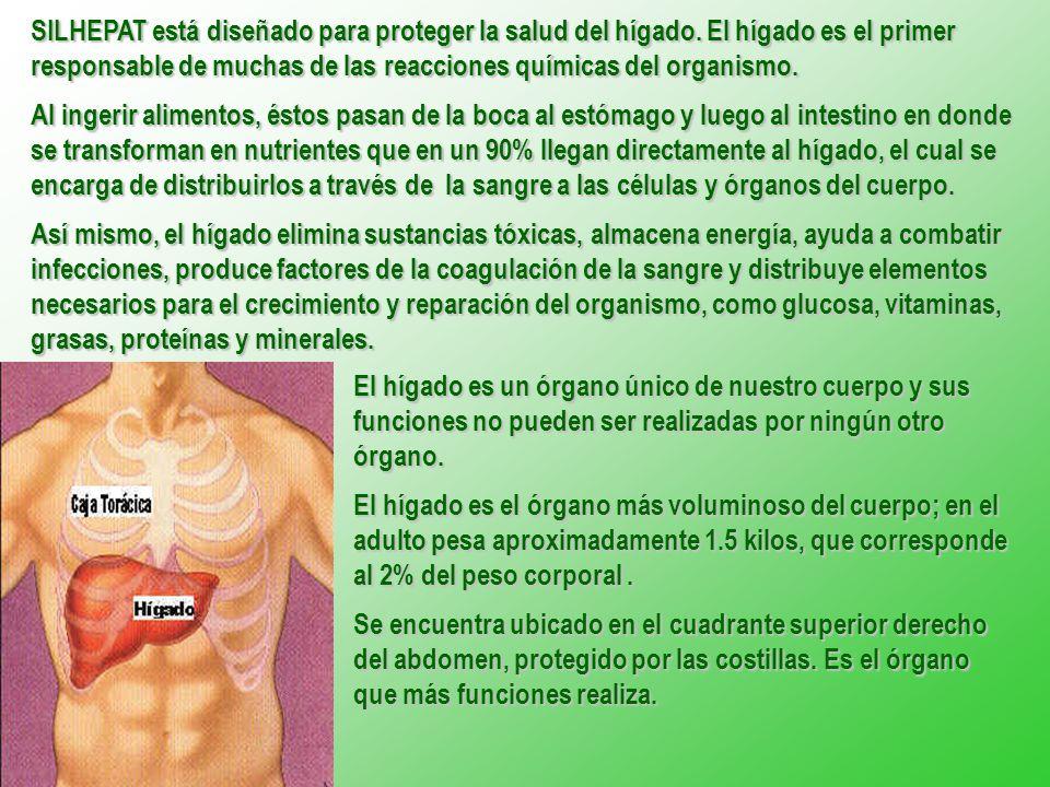 El hígado es un órgano único de nuestro cuerpo y sus funciones no pueden ser realizadas por ningún otro órgano.