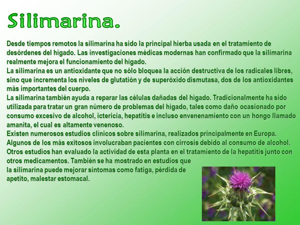 Desde tiempos remotos la silimarina ha sido la principal hierba usada en el tratamiento de desórdenes del hígado.