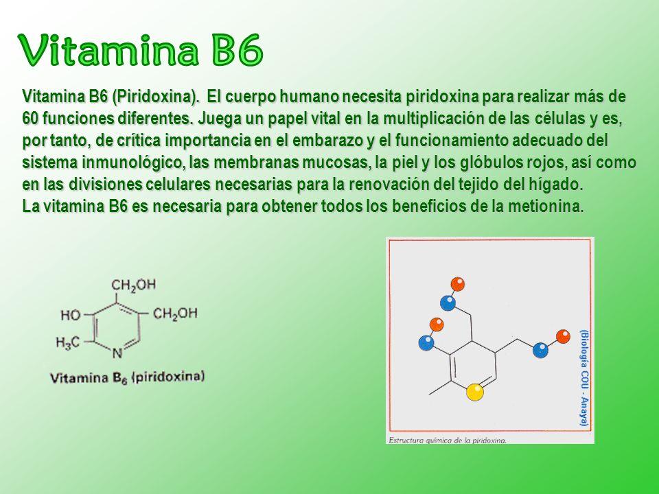 Vitamina B6 (Piridoxina). El cuerpo humano necesita piridoxina para realizar más de 60 funciones diferentes. Juega un papel vital en la multiplicación