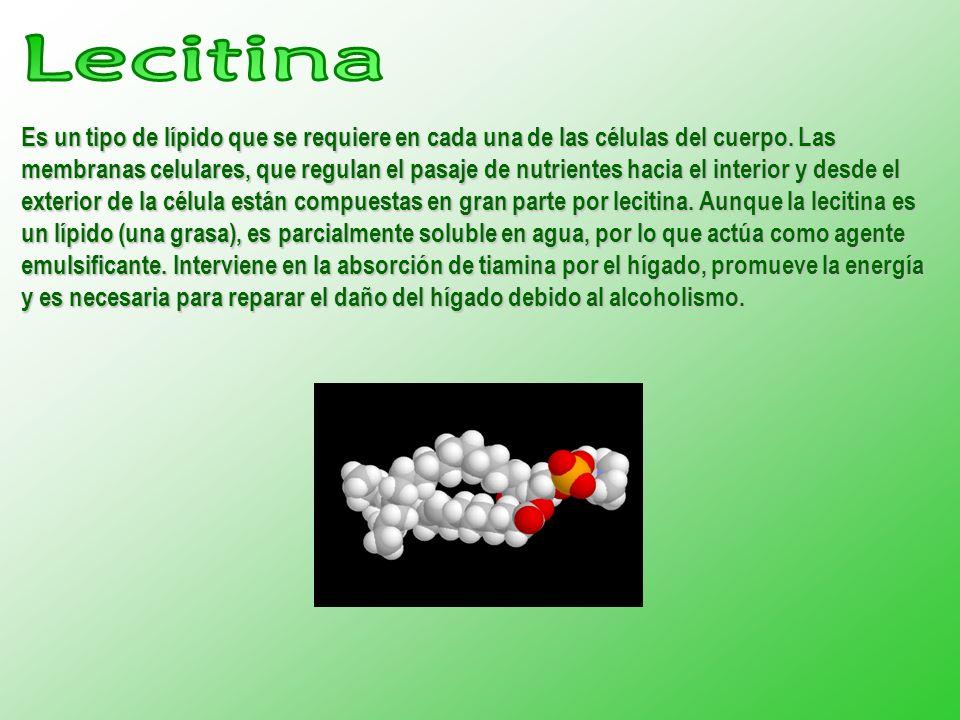 Es un tipo de lípido que se requiere en cada una de las células del cuerpo. Las membranas celulares, que regulan el pasaje de nutrientes hacia el inte