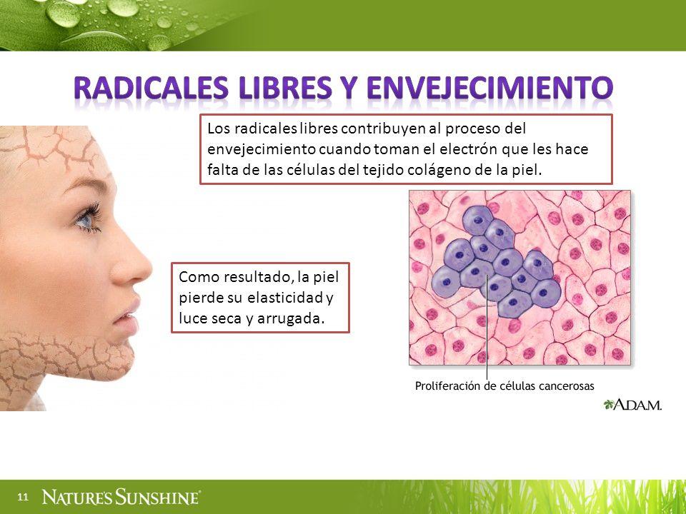 11 Los radicales libres contribuyen al proceso del envejecimiento cuando toman el electrón que les hace falta de las células del tejido colágeno de la