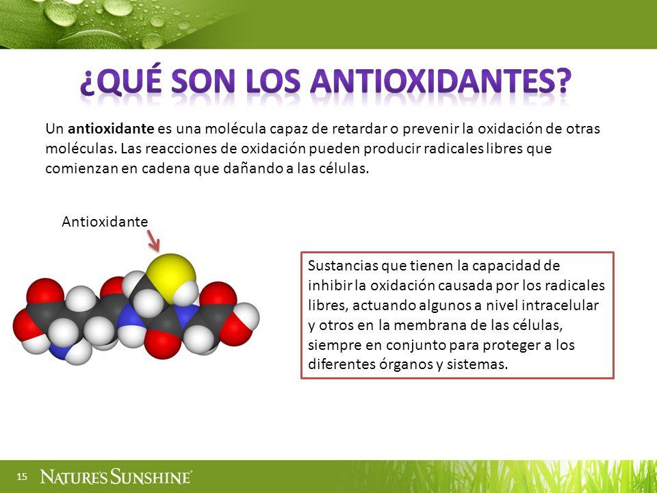15 Un antioxidante es una molécula capaz de retardar o prevenir la oxidación de otras moléculas. Las reacciones de oxidación pueden producir radicales