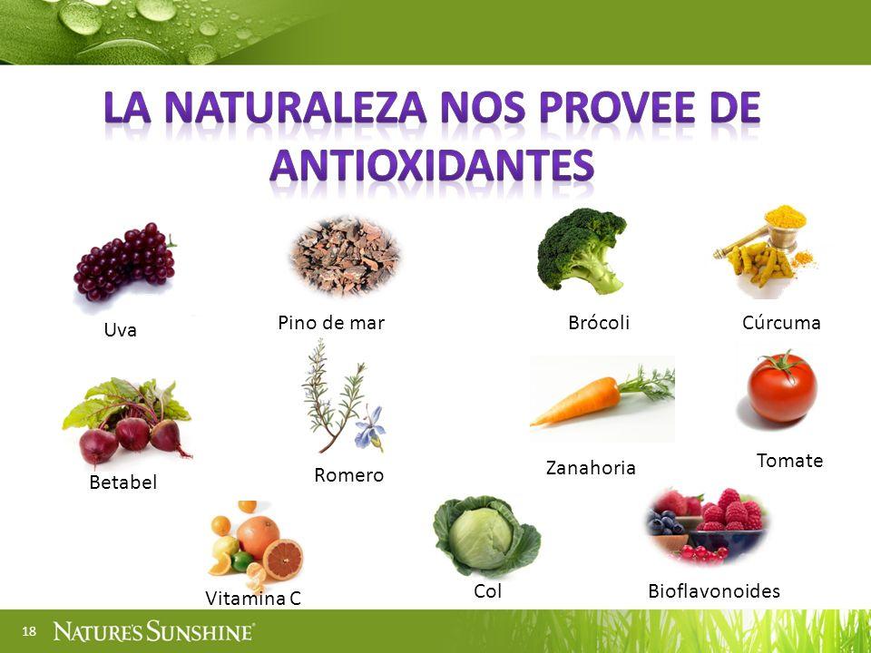 18 Uva Pino de marBrócoliCúrcuma Betabel Romero Zanahoria Tomate Vitamina C ColBioflavonoides