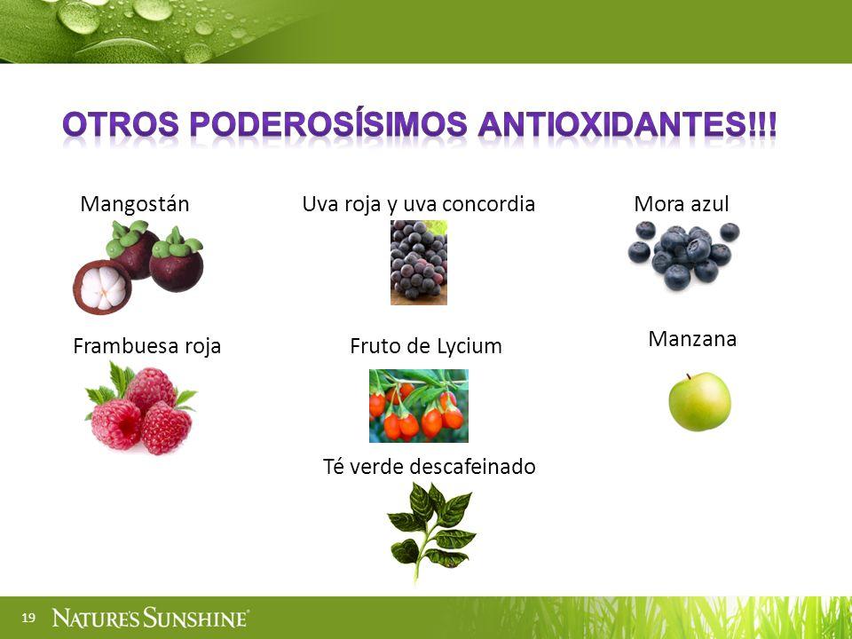 19 MangostánUva roja y uva concordiaMora azul Frambuesa rojaFruto de Lycium Manzana Té verde descafeinado