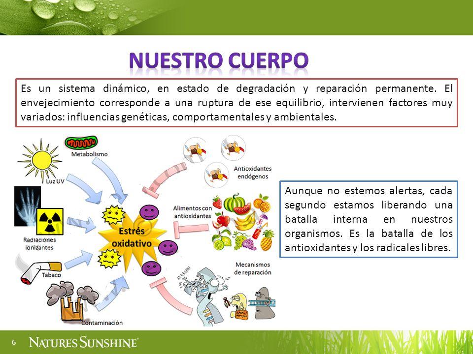 7 Envejecemos porque las macromoléculas que componen nuestro organismo (ácidos nucléicos, proteínas y lípidos) van acumulando daños y pérdida de la función.