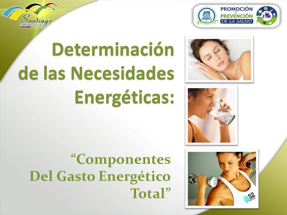Determinación de las Necesidades Energéticas: Determinación de las Necesidades Energéticas: Componentes Del Gasto Energético Total