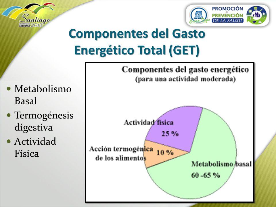 Componentes del Gasto Energético Total (GET) Metabolismo Basal Termogénesis digestiva Actividad Física
