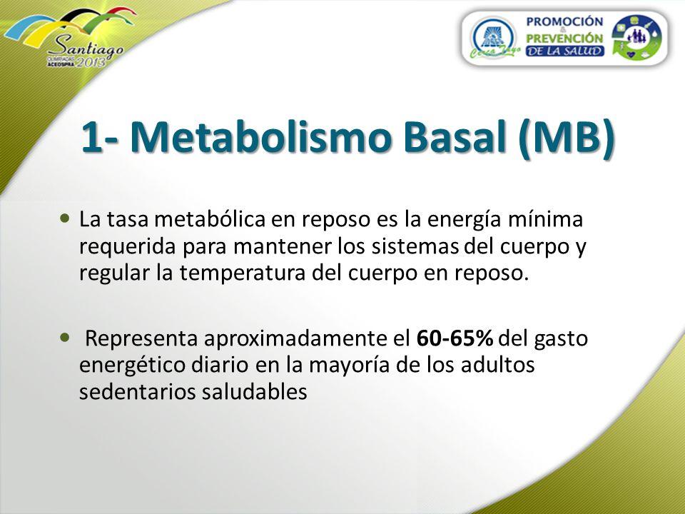 1- Metabolismo Basal (MB) La tasa metabólica en reposo es la energía mínima requerida para mantener los sistemas del cuerpo y regular la temperatura d