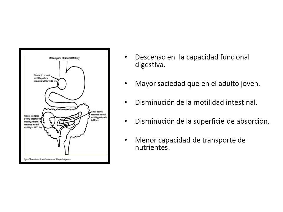 Descenso en la capacidad funcional digestiva. Mayor saciedad que en el adulto joven. Disminución de la motilidad intestinal. Disminución de la superfi