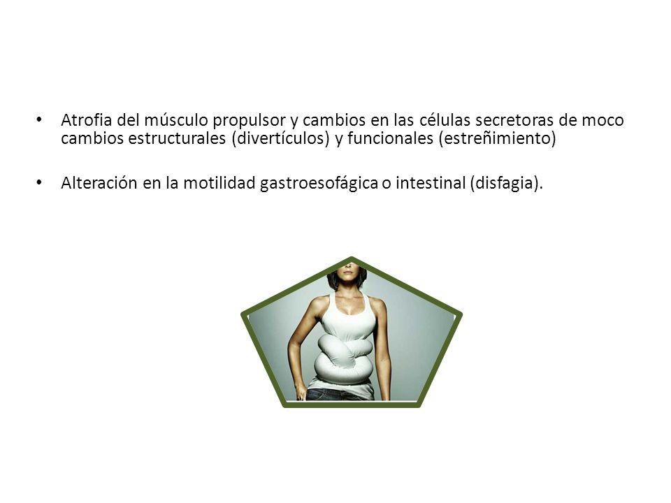 Atrofia del músculo propulsor y cambios en las células secretoras de moco cambios estructurales (divertículos) y funcionales (estreñimiento) Alteració