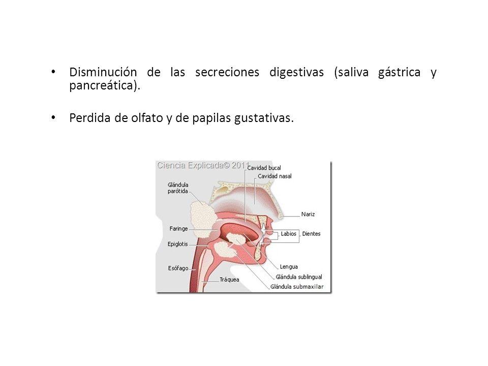 Disminución de las secreciones digestivas (saliva gástrica y pancreática). Perdida de olfato y de papilas gustativas.