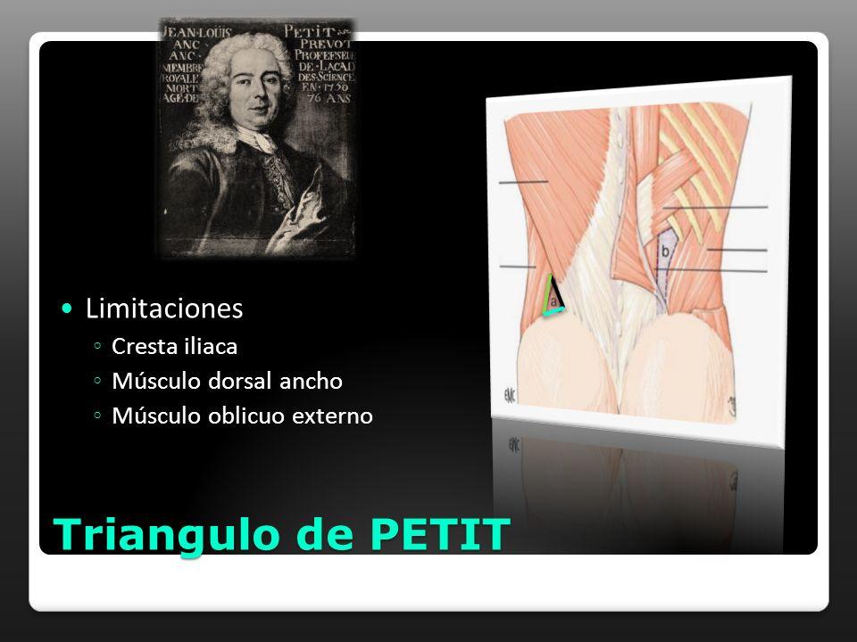 Triangulo de PETIT Limitaciones Cresta iliaca Músculo dorsal ancho Músculo oblicuo externo
