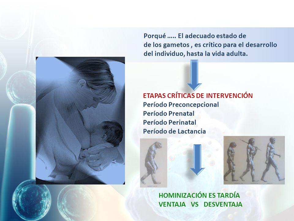 ETAPAS CRÍTICAS DE INTERVENCIÓN Período Preconcepcional Período Prenatal Período Perinatal Período de Lactancia HOMINIZACIÓN ES TARDÍA VENTAJA VS DESVENTAJA Porqué …..