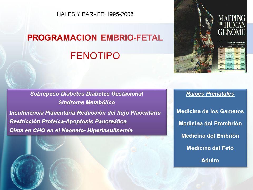 HALES Y BARKER 1995-2005 PROGRAMACION EMBRIO-FETAL FENOTIPO Raices Prenatales Medicina de los Gametos Medicina del Prembrión Medicina del Embrión Medicina del Feto Adulto Raices Prenatales Medicina de los Gametos Medicina del Prembrión Medicina del Embrión Medicina del Feto Adulto Sobrepeso-Diabetes-Diabetes Gestacional Síndrome Metabólico Insuficiencia Placentaria-Reducción del flujo Placentario Restricción Proteica-Apoptosis Pancreática Dieta en CHO en el Neonato- Hiperinsulinemia Sobrepeso-Diabetes-Diabetes Gestacional Síndrome Metabólico Insuficiencia Placentaria-Reducción del flujo Placentario Restricción Proteica-Apoptosis Pancreática Dieta en CHO en el Neonato- Hiperinsulinemia