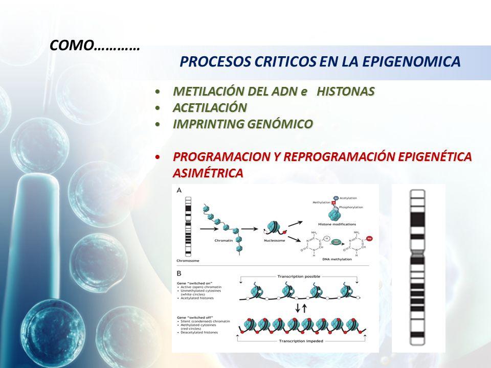 METILACIÓN DEL ADN e HISTONASMETILACIÓN DEL ADN e HISTONAS ACETILACIÓNACETILACIÓN IMPRINTING GENÓMICOIMPRINTING GENÓMICO PROGRAMACION Y REPROGRAMACIÓN EPIGENÉTICA ASIMÉTRICAPROGRAMACION Y REPROGRAMACIÓN EPIGENÉTICA ASIMÉTRICA PROCESOS CRITICOS EN LA EPIGENOMICA COMO…………