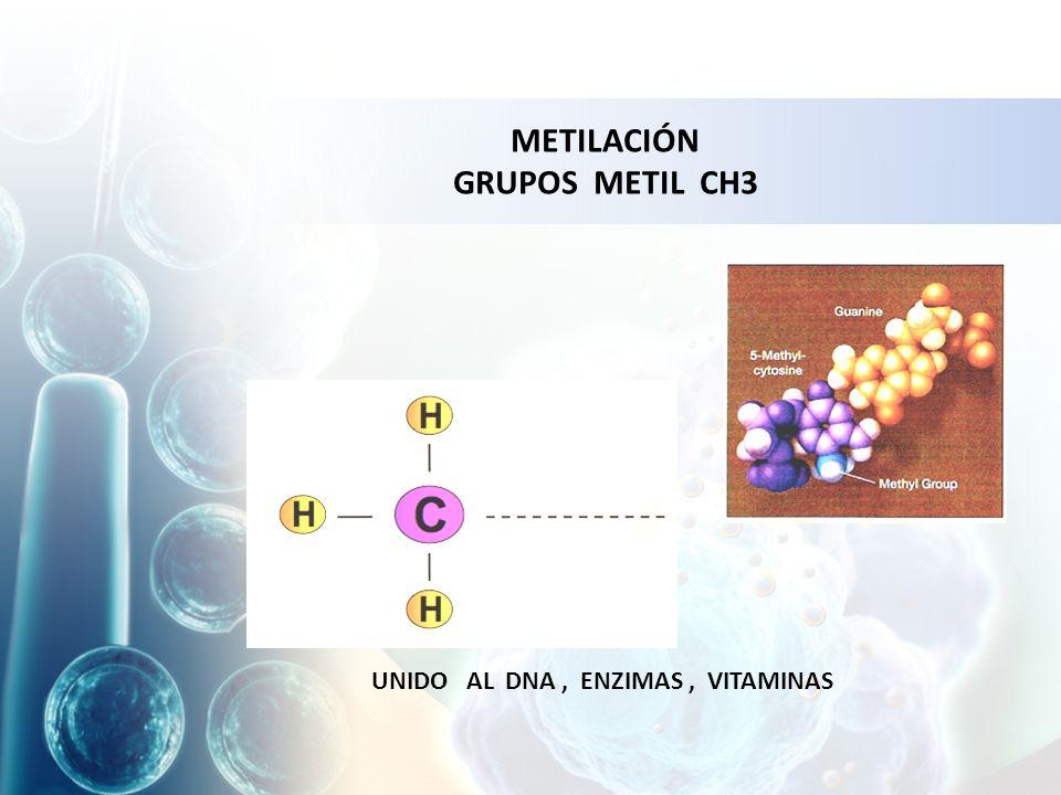 UNIDO AL DNA, ENZIMAS, VITAMINAS METILACIÓN GRUPOS METIL CH3
