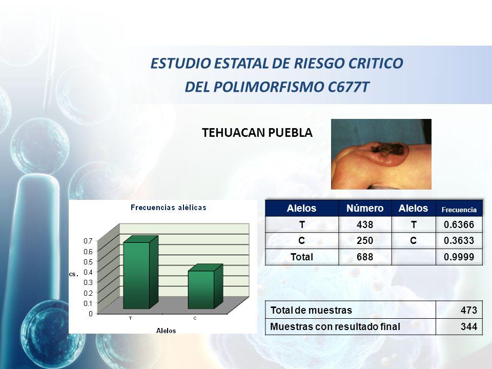 Total de muestras473 Muestras con resultado final344 TEHUACAN PUEBLA ESTUDIO ESTATAL DE RIESGO CRITICO DEL POLIMORFISMO C677T