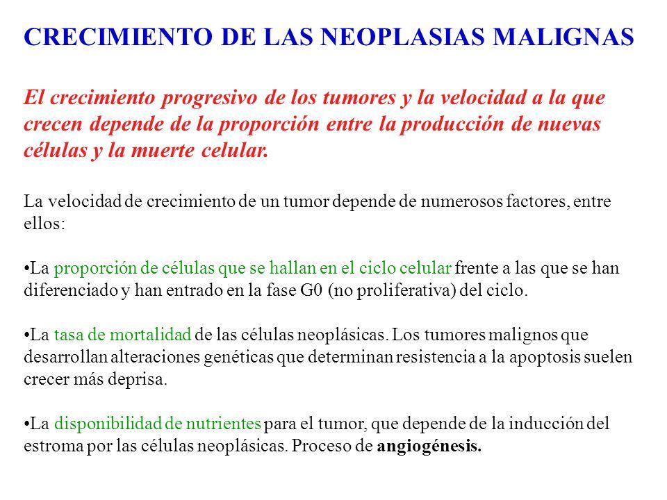 CRECIMIENTO DE LAS NEOPLASIAS MALIGNAS El crecimiento progresivo de los tumores y la velocidad a la que crecen depende de la proporción entre la produ