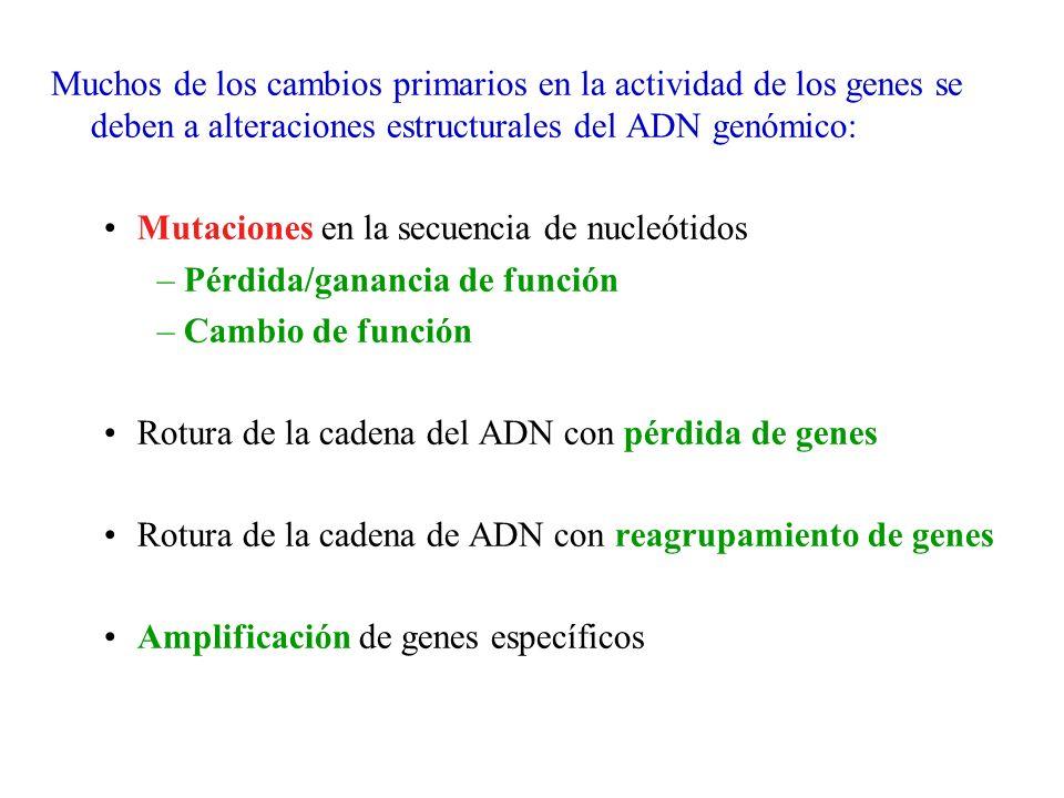 Muchos de los cambios primarios en la actividad de los genes se deben a alteraciones estructurales del ADN genómico: Mutaciones en la secuencia de nuc