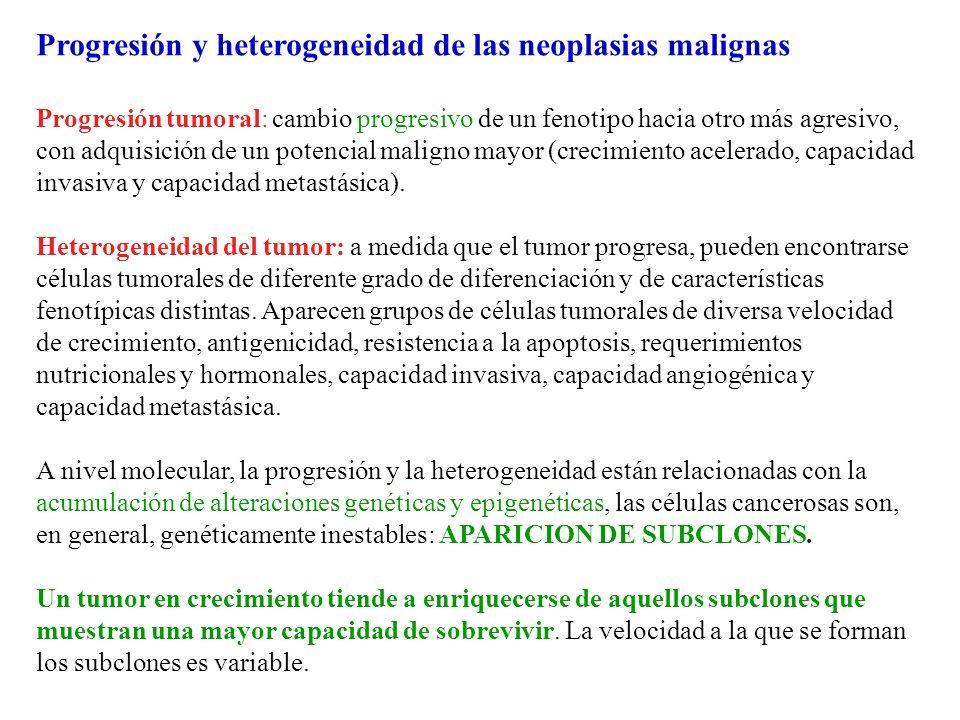 Progresión y heterogeneidad de las neoplasias malignas Progresión tumoral: cambio progresivo de un fenotipo hacia otro más agresivo, con adquisición d
