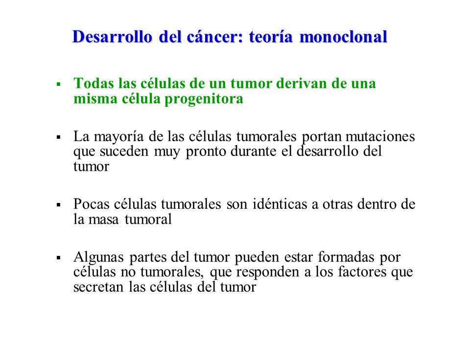 Desarrollo del cáncer: teoría monoclonal Todas las células de un tumor derivan de una misma célula progenitora La mayoría de las células tumorales por
