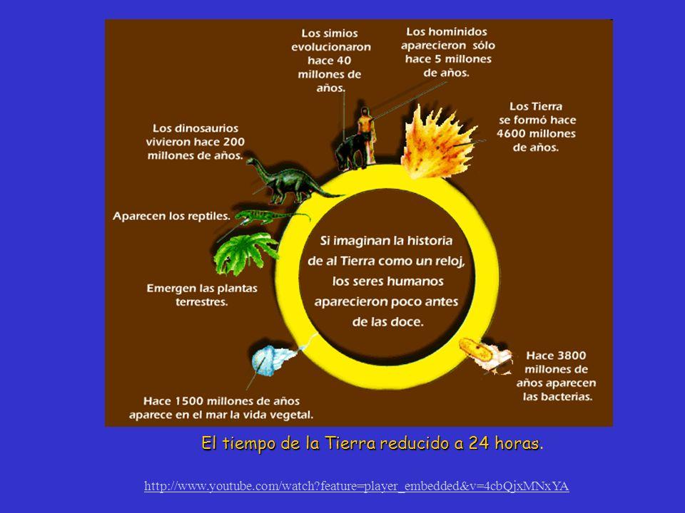 El tiempo de la Tierra reducido a 24 horas El tiempo de la Tierra reducido a 24 horas. http://www.youtube.com/watch?feature=player_embedded&v=4cbQjxMN