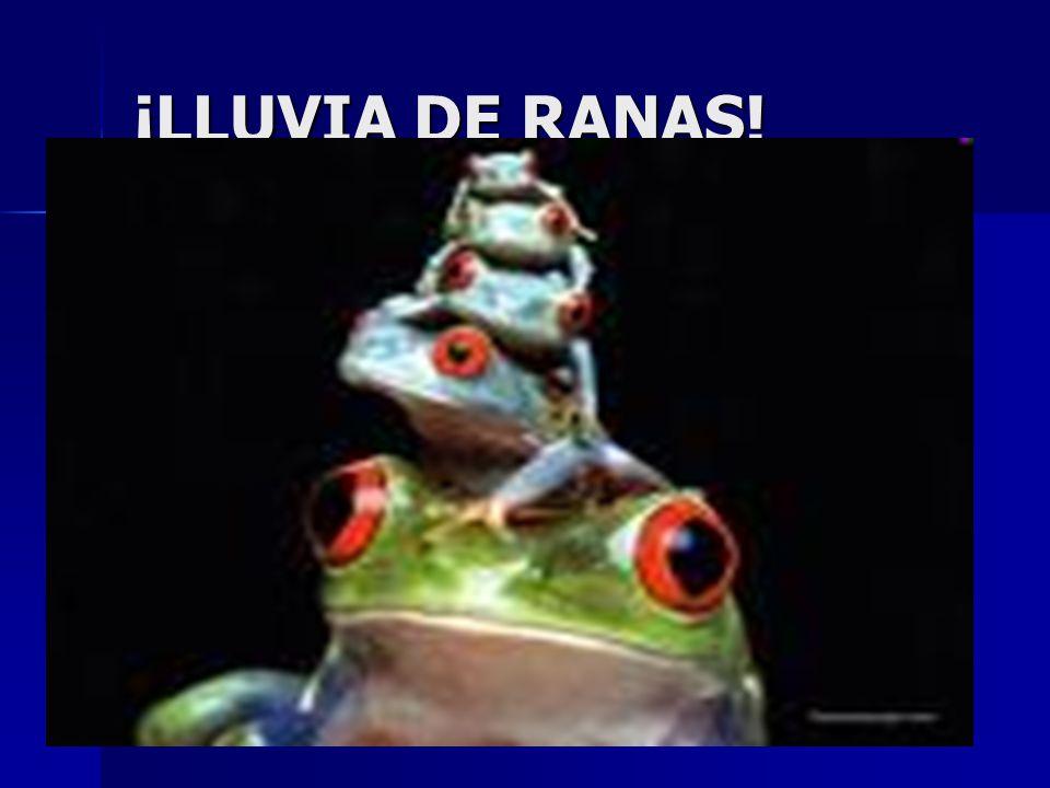 ¡LLUVIA DE RANAS!
