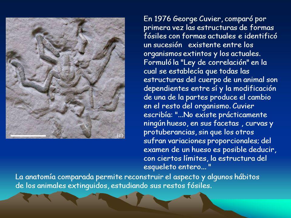 La anatomía comparada permite reconstruir el aspecto y algunos hábitos de los animales extinguidos, estudiando sus restos fósiles. En 1976 George Cuvi